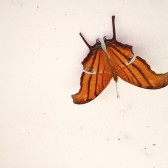 Tiger Butterfly and Painted Concrete